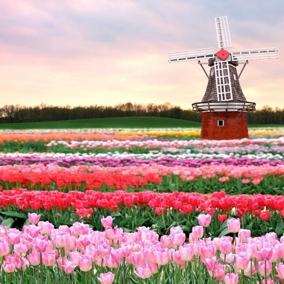 Hội thảo Du học Hà Lan – Phỏng vấn học bổng trường ĐH Khoa học ứng dụng HAN